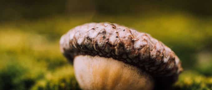Acorns vs Robinhood vs Stash - Picture of an Acorn